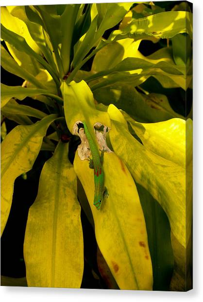 Mr Gecko Canvas Print