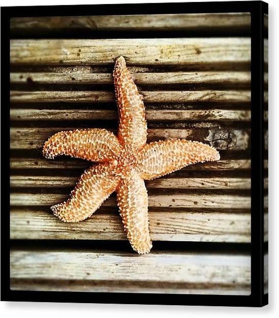 Ocean Animals Canvas Print - Mr Starfish #starfish #sea #fish #shell by Suzie Attaway