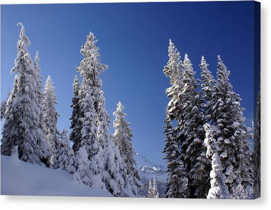 Mt. Rainier's Christmas Tree's Canvas Print