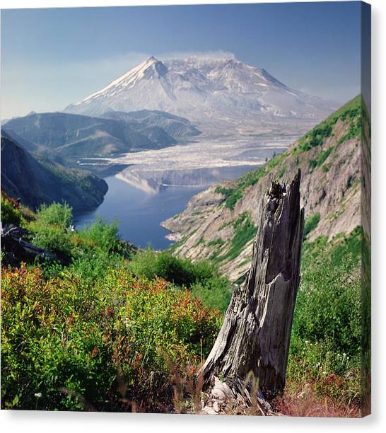 Mount St. Helens Canvas Print - Mt. St. Helens by Danielle D. Hughson