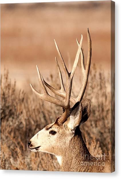 Mule Deer Canvas Print by Earl Nelson