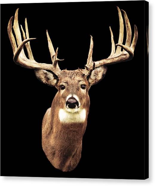 Mule Deer Head Canvas Print