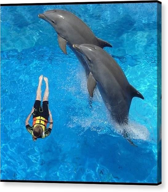 Dolphins Canvas Print - #mundamar #benidorm #spain #dolphin by Jo Shaw