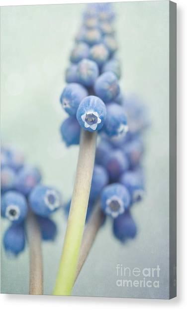 Nature Still Life Canvas Print - Muscari by Priska Wettstein