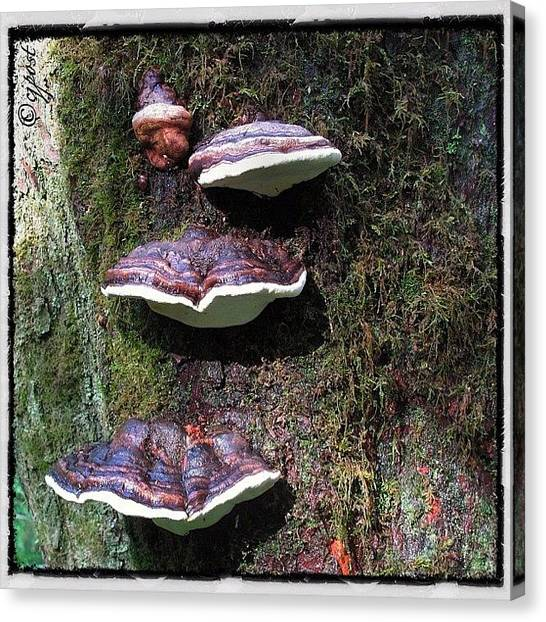 Rainforests Canvas Print - Mushrooms In The Rainforest 4of5 Sept 4 by Cynthia Post