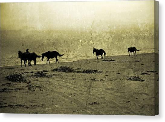 Roaming Canvas Print - Mustangs by Betsy Knapp