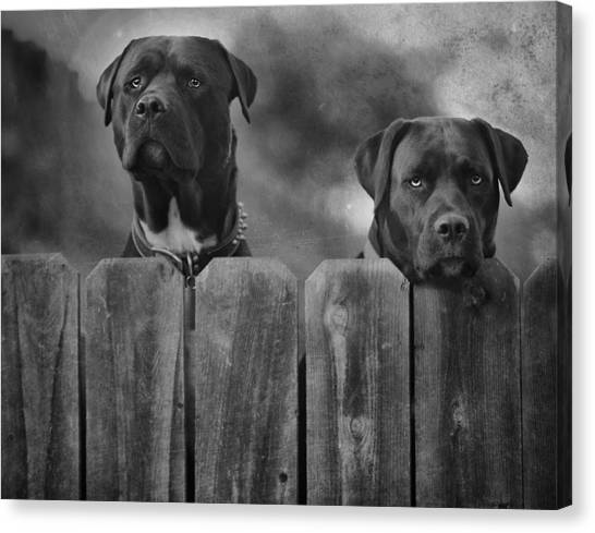 Pit Bull Canvas Print - Mutt And Jeff 2 by Larry Marshall