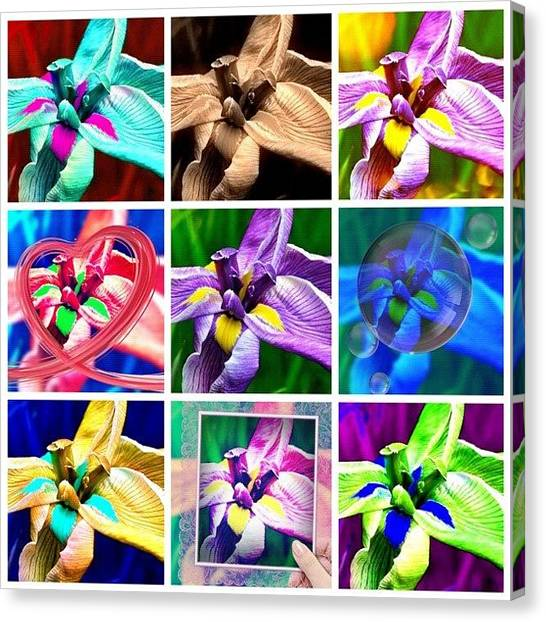 Irises Canvas Print - My #9of1 Iris For @idphoto! #all_shots by Anna Porter