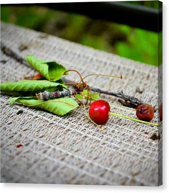 Still Life Canvas Print - My Backyard by Becca Watters