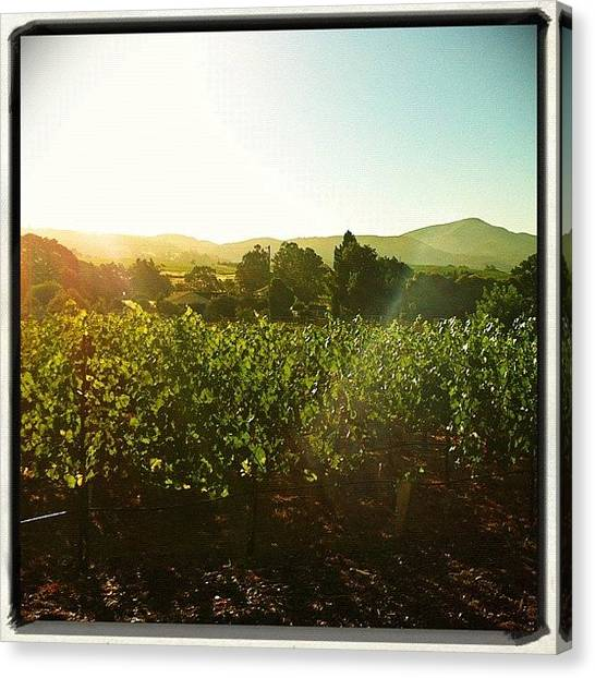 Vineyard Canvas Print - My Backyard In #napa. #skysnappers by Jackie W