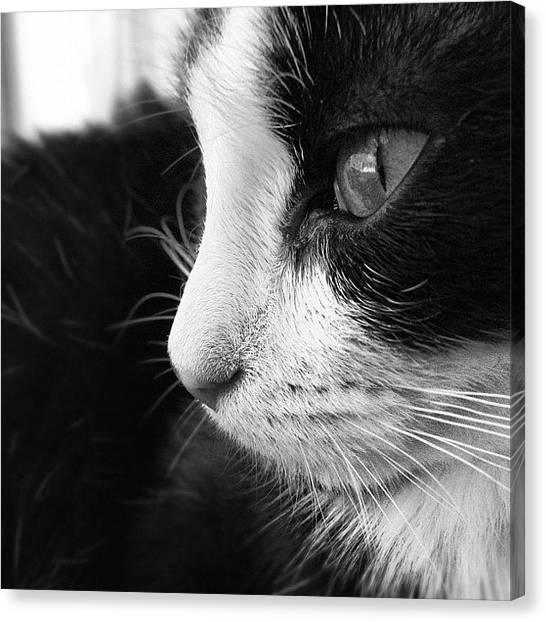 Kittens Canvas Print - My Beautiful by Heidi Taule