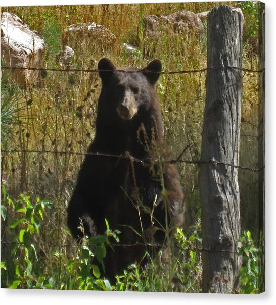 My Capture In Beulah Today Canvas Print