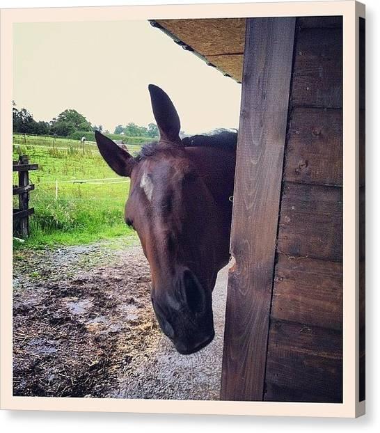 Thoroughbreds Canvas Print - My Horse Swift #swift #horse #mare #tb by Joanne Hewitt