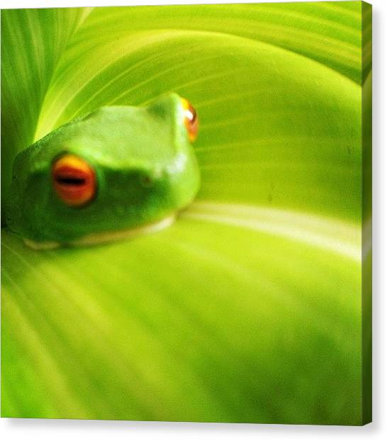 Frogs Canvas Print - My Little Friend. #nature #frog #sspics by Leonie Leotta