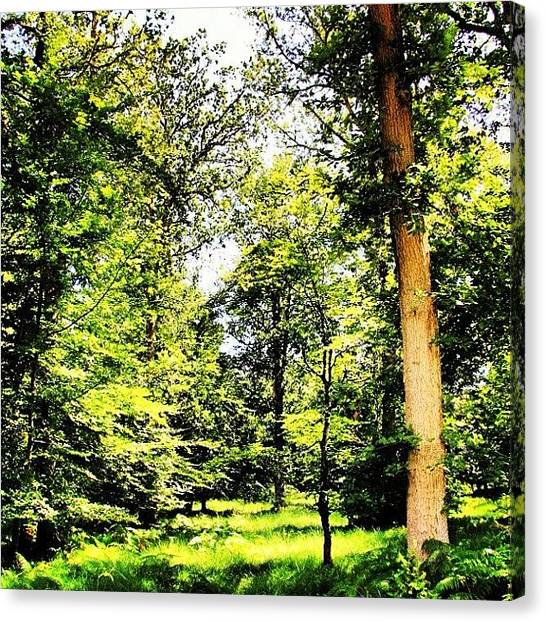 Woodland Canvas Print - My Magical Woodland Clearing by Chris Barber