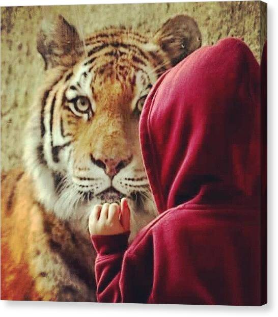 Tigers Canvas Print - My Nephew The Tiger Whisperer #tiger by Melissa Wyatt