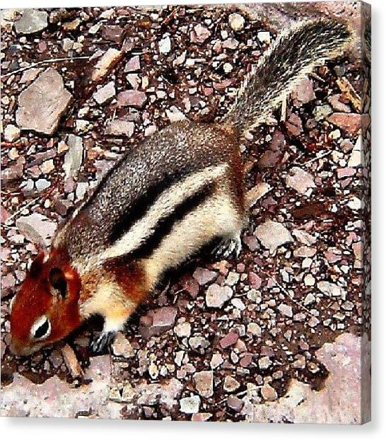 Squirrels Canvas Print - My New Best Friend by Drew R