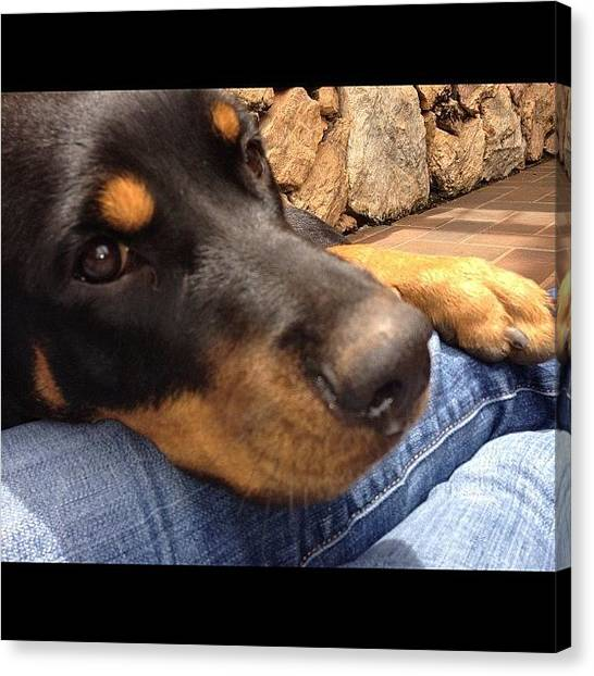 Rottweilers Canvas Print - My Sweet And Adorable Hera!!! by Adriana Guimaraes