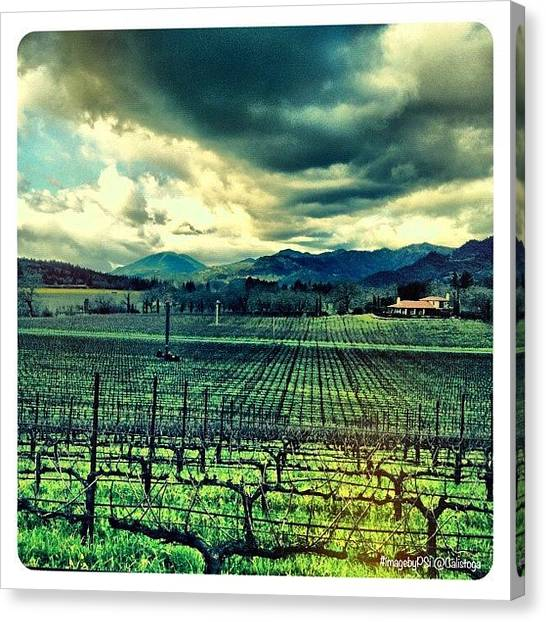 Vineyard Canvas Print - My View Right Now From @ehlersestate by Peter Stetson
