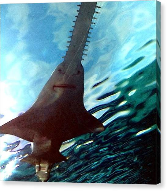 Hammerhead Sharks Canvas Print - #myrtlebeach #southcarolina #ocean by Stephanie Thomas