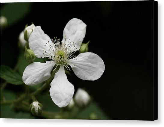 Mysterious Pretty White Flower Canvas Print by Bonnie Boden
