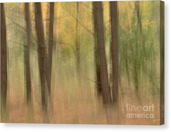 Mystery Woods Canvas Print