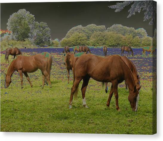 Mystical Horses Canvas Print by Fred Whalley