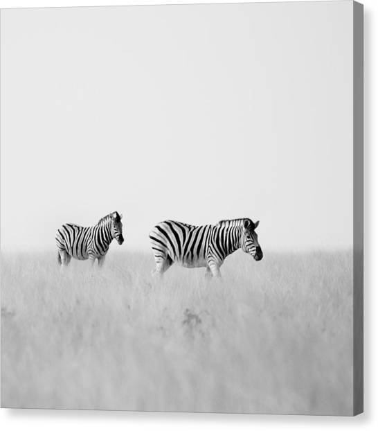 Zebras Canvas Print - Namibia Zebras I by Nina Papiorek