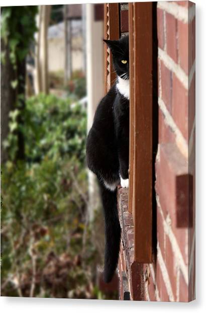 Manx Cats Canvas Print - Nancy Peekaboo by Kathleen Horner