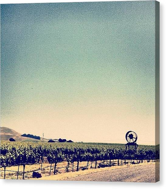 Vineyard Canvas Print - #napa by Kristy Korcz