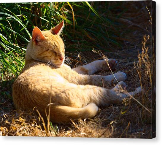 Napping Orange Cat Canvas Print