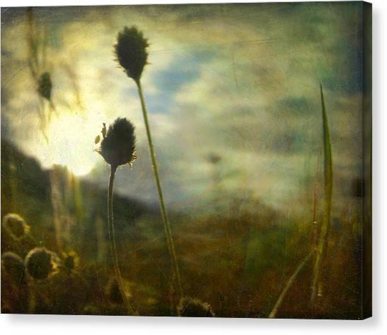 Nature #11 Canvas Print by Alfredo Gonzalez