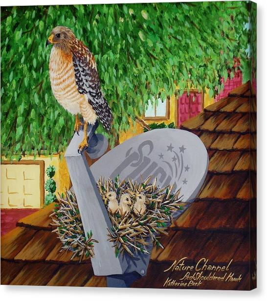 Nature Channel- Red Shouldered Hawk Canvas Print