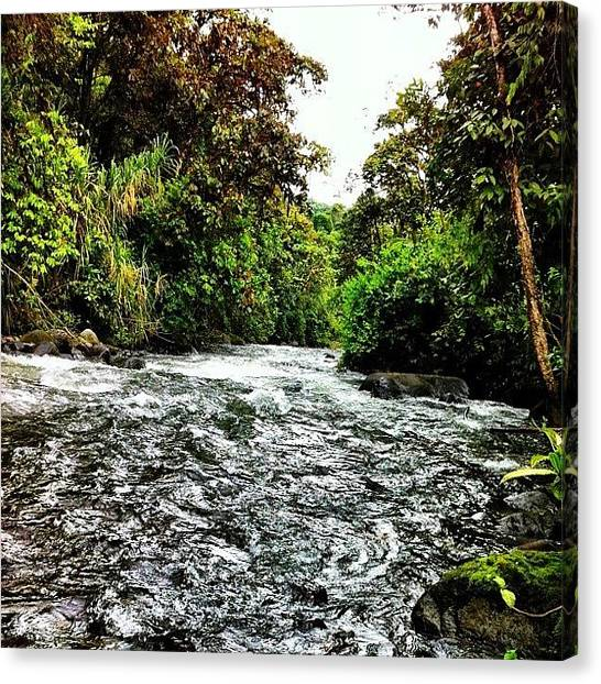 Rainforests Canvas Print - #nature #ecuador #instagood #iphonesia by Martin Endara