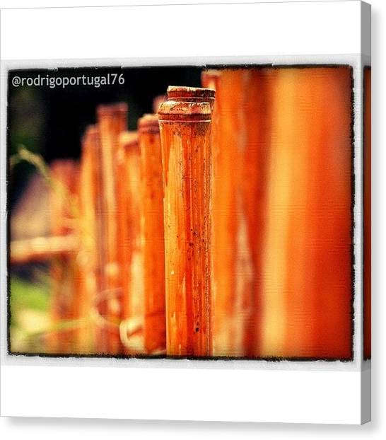 Bamboo Canvas Print - #nature #flower #bamboo #trees by Rodrigo Portugal