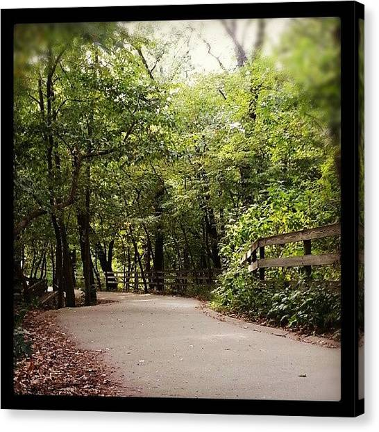 Forest Paths Canvas Print - #nature #green #scenery #scenic #shrub by Joe Wark