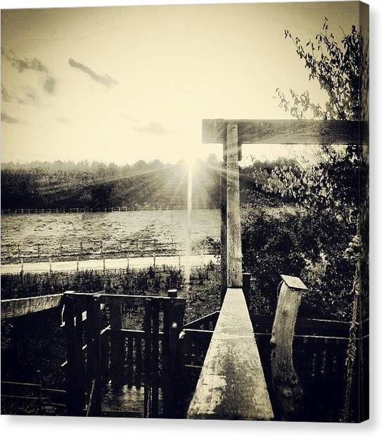 Back Canvas Print - #nature #in #black #white #trees #sun by Ole Back