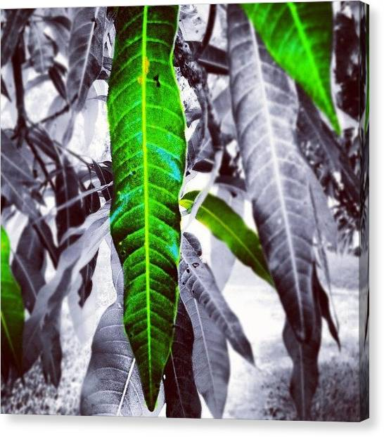 Bamboo Canvas Print - Nature by Juan Ramos