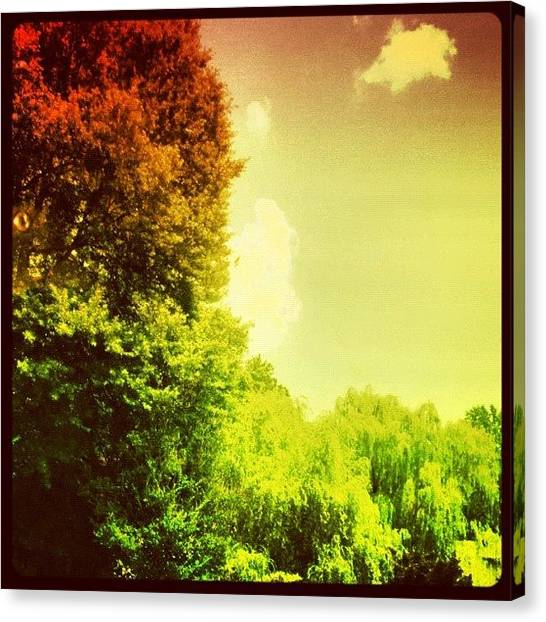Driving Canvas Print - #nature #red #green #driving #tree #sky by Katie Williams