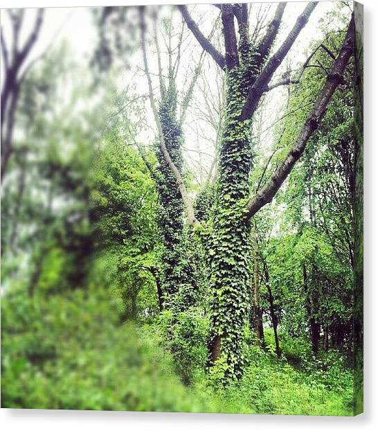 England Canvas Print - #nature #trees #tree #green #salford by Abdelrahman Alawwad