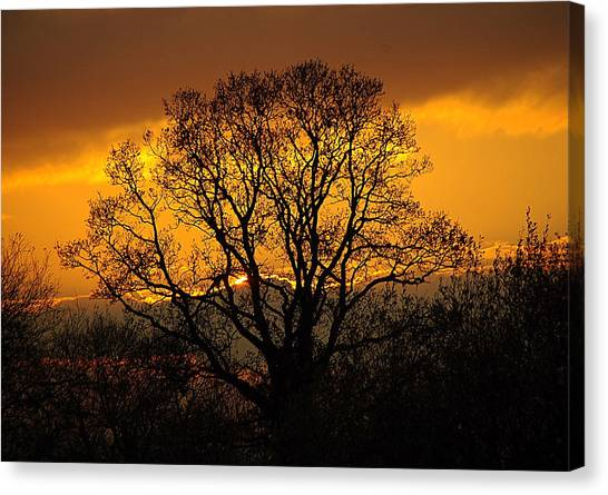 Nature's Gold Canvas Print by Cat Shatwell