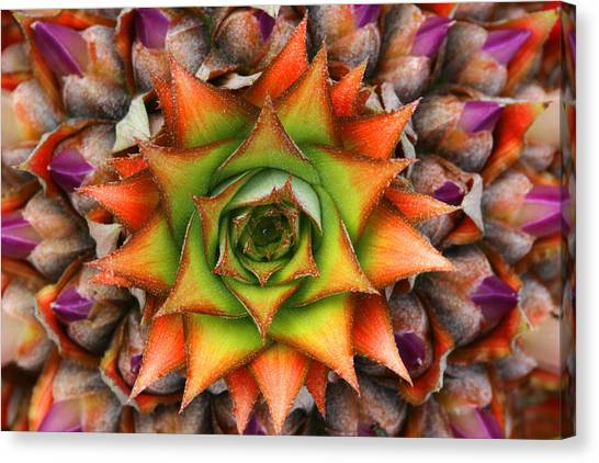 Natures Kaleidoscope Canvas Print