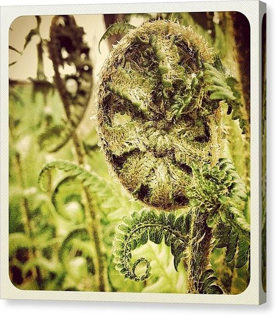 Spiral Canvas Print - Nature's Paisley Pattern. #earlybird by Robert Campbell