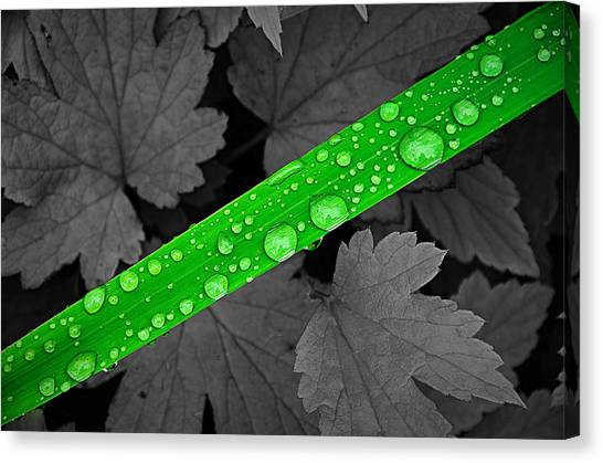Natures Ribbon Canvas Print by Paul Causie