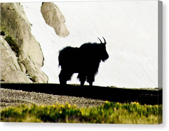 Nature's Silhouette Canvas Print