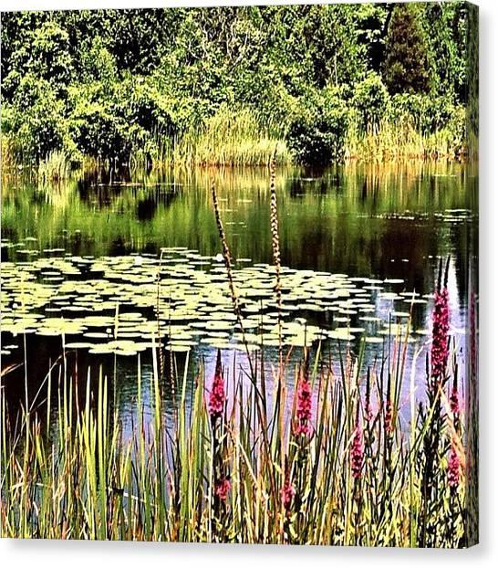 Marshes Canvas Print - Near Lake Ontario #ontario #canada by Shelley Walsh