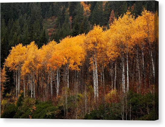 Near Leavenworth Wa Canvas Print