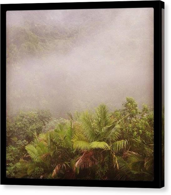Rainforests Canvas Print - Neblina by Vanessa Valedon