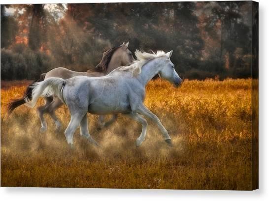Pleasure Horse Canvas Print - Neck And Neck by Susan Candelario