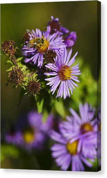 Nectar Gathering Canvas Print